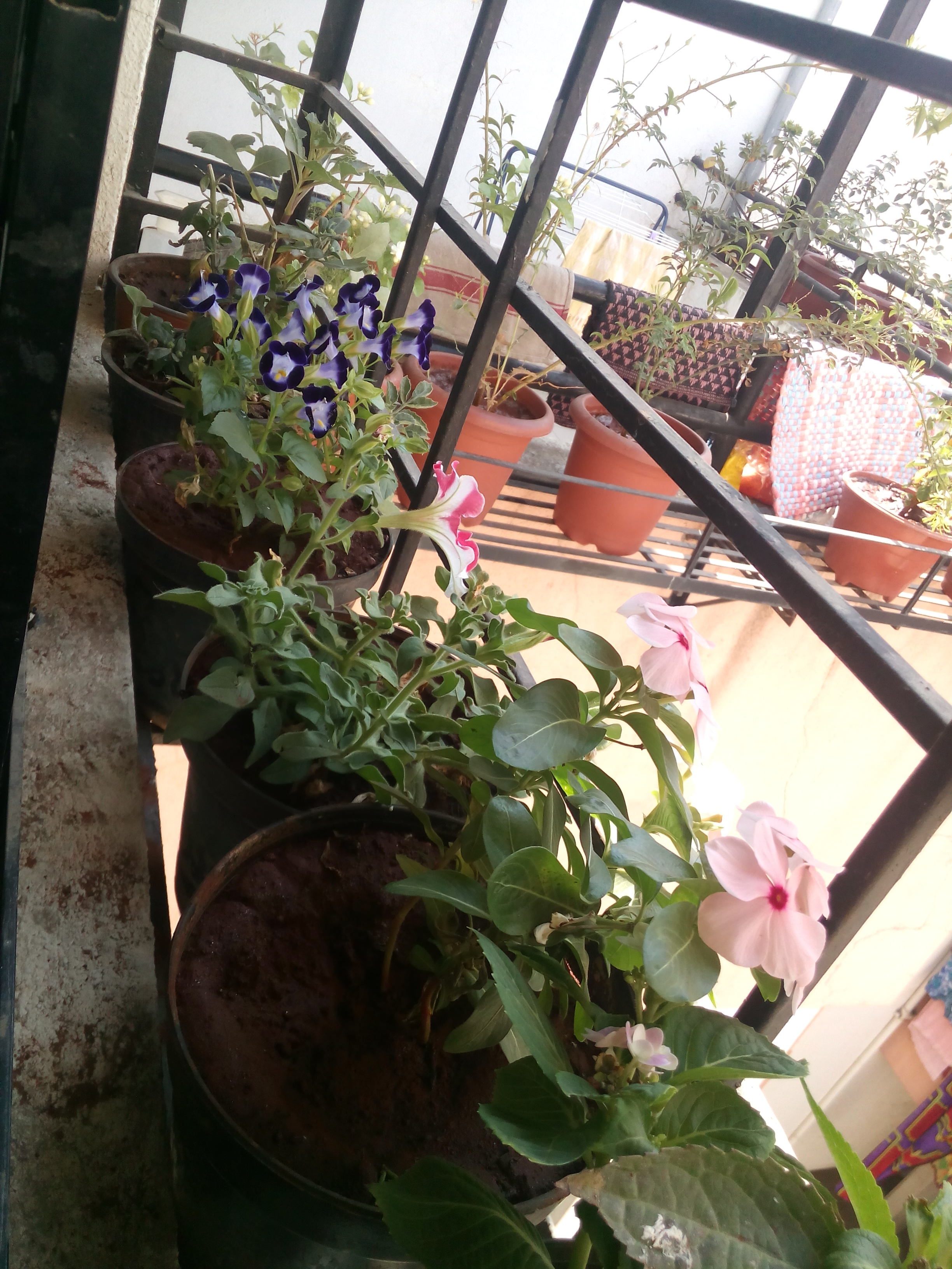 Small Flowering Plants