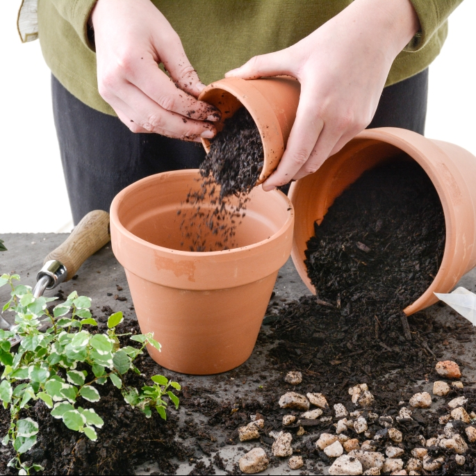 Potting A Plant-Step3