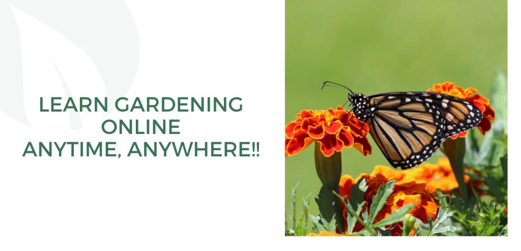 Online Gardening Workshop