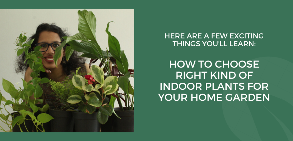 How to choose the right kind of Indoor plants for you home garden