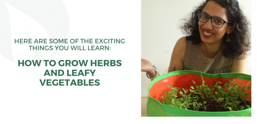 how to grow herbs and leafy vegetables.