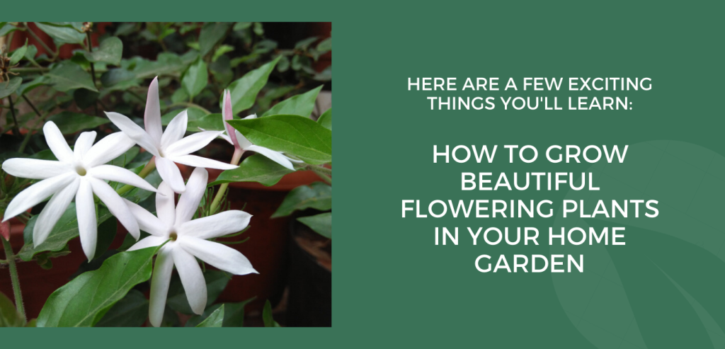 How to grow  beautiful flowering plants in your Garden.