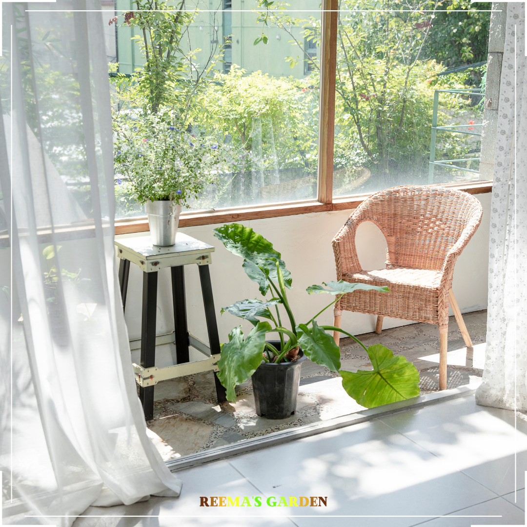 How adding greens to your space enhances it. A image of balcony with plants