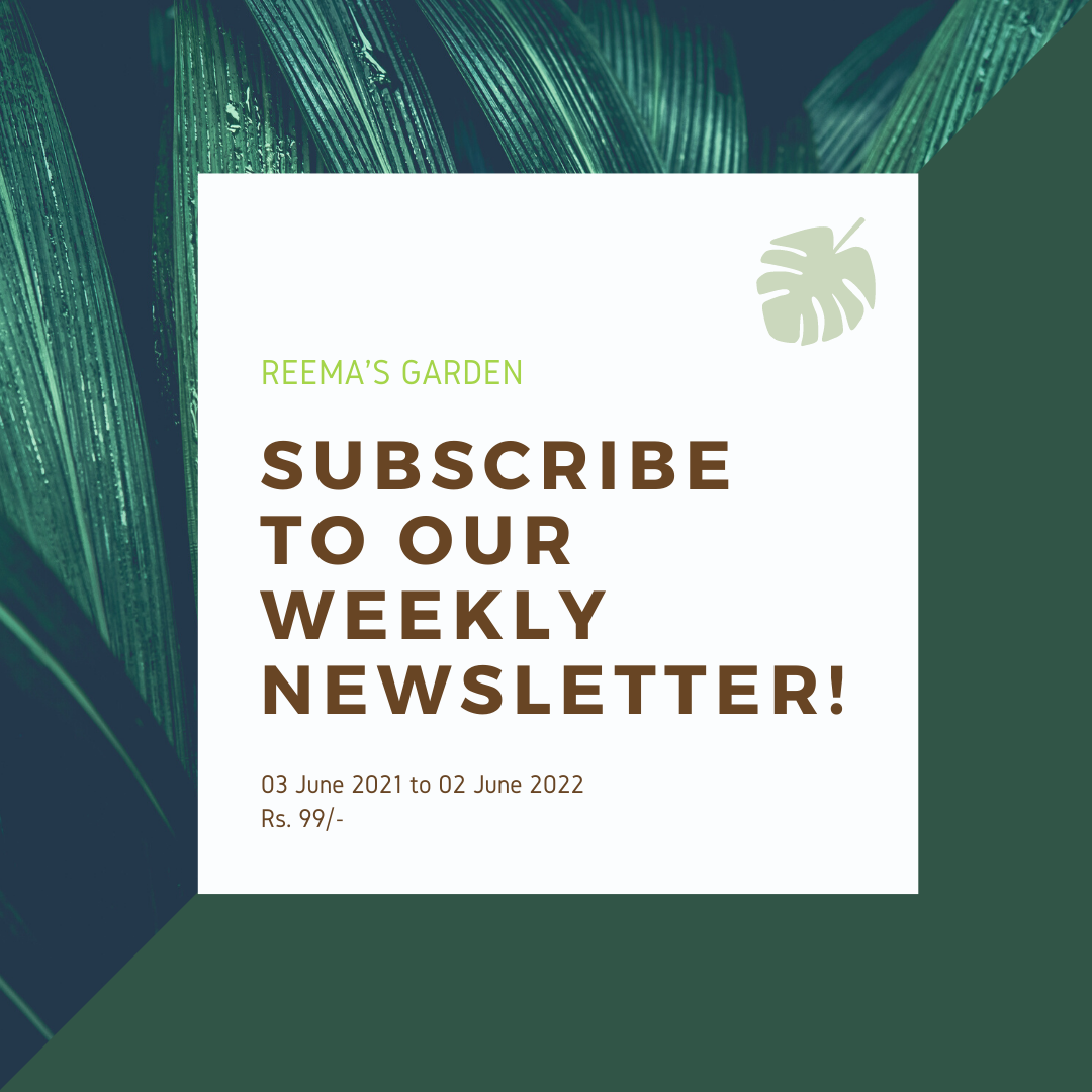 E-newsletter subscription image